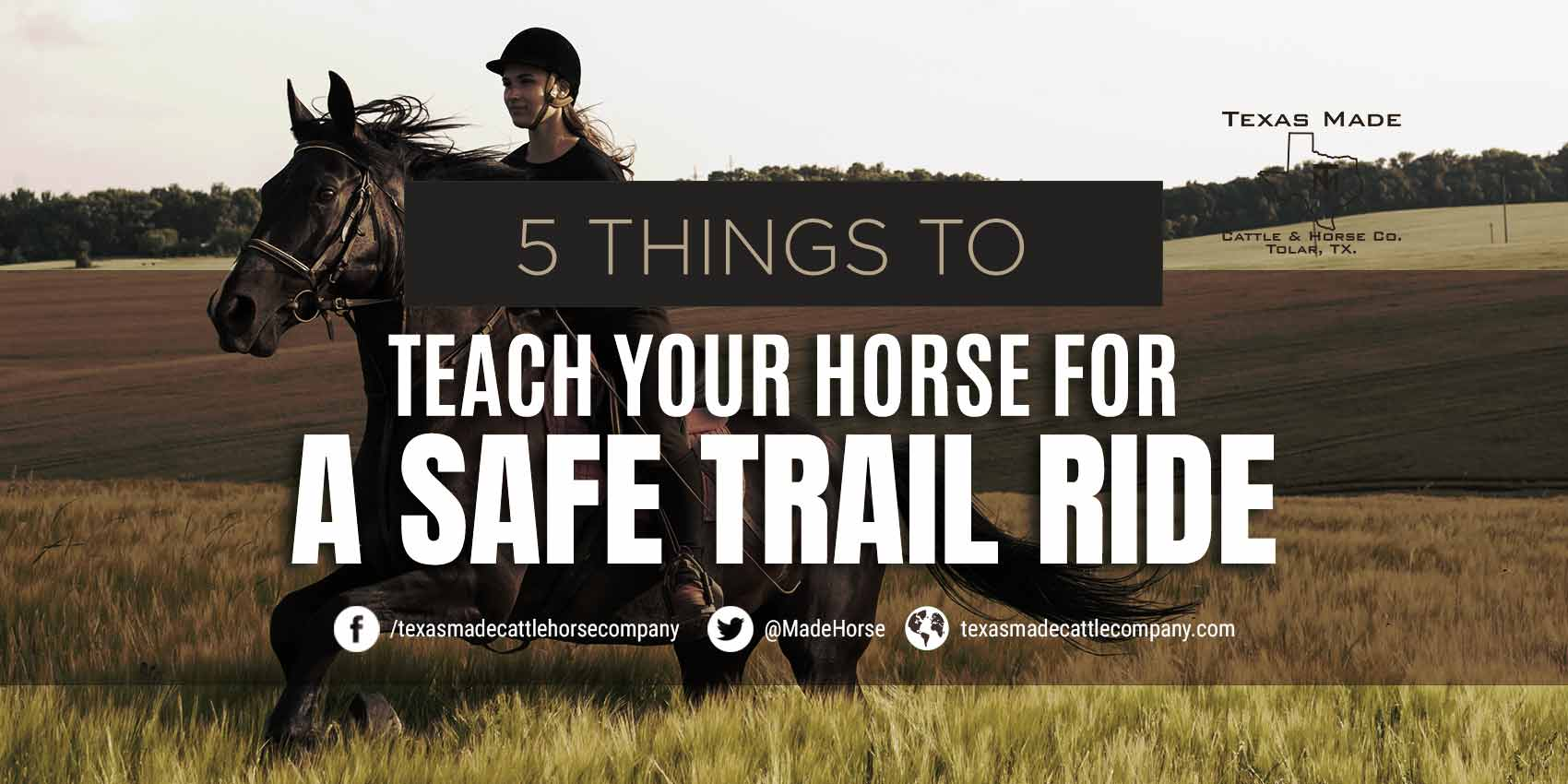 5 Things to Teach Your Horse for a Safe Trail Ride
