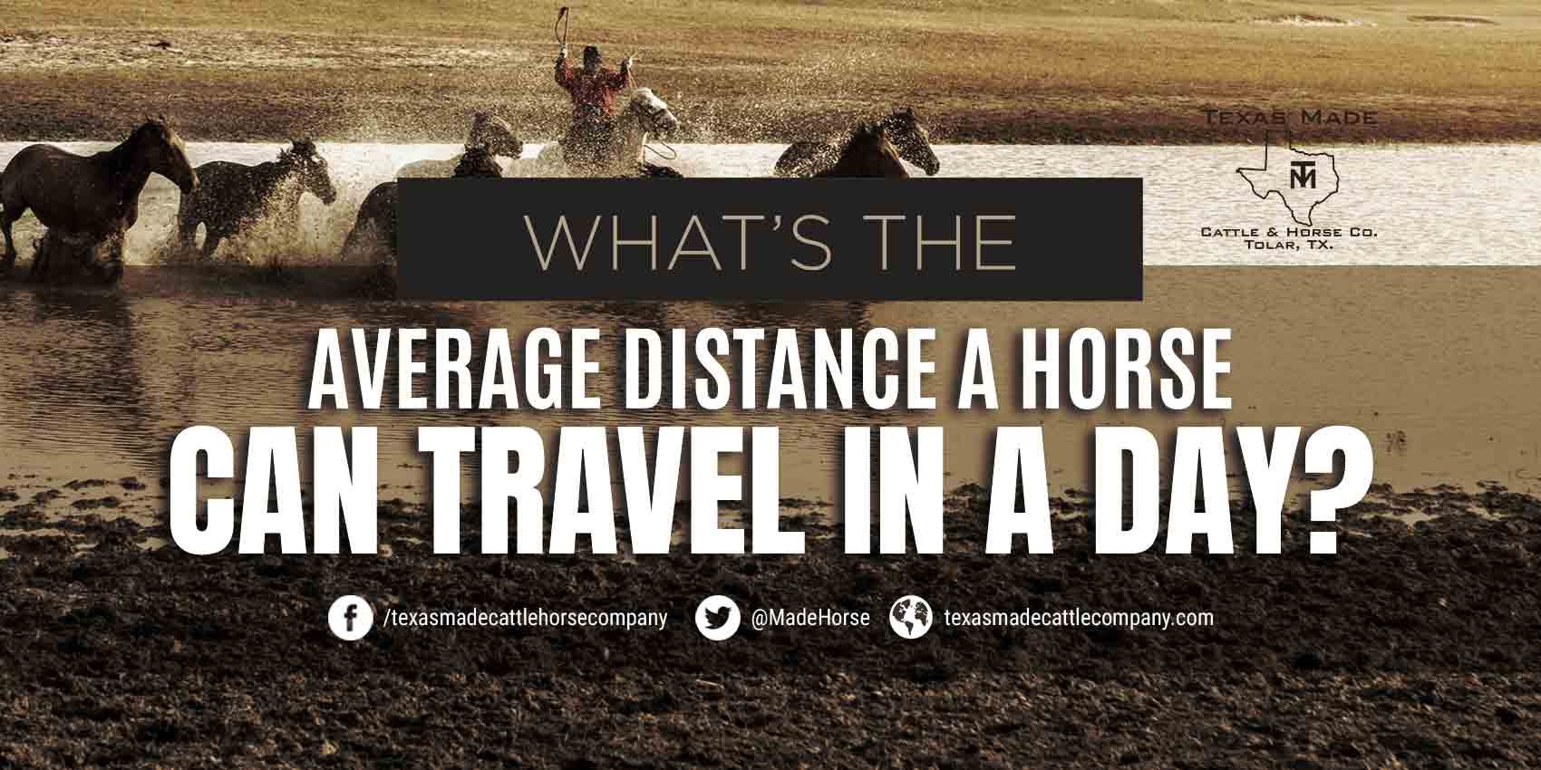 What's the Average Distance a Horse Can Travel in a Day?