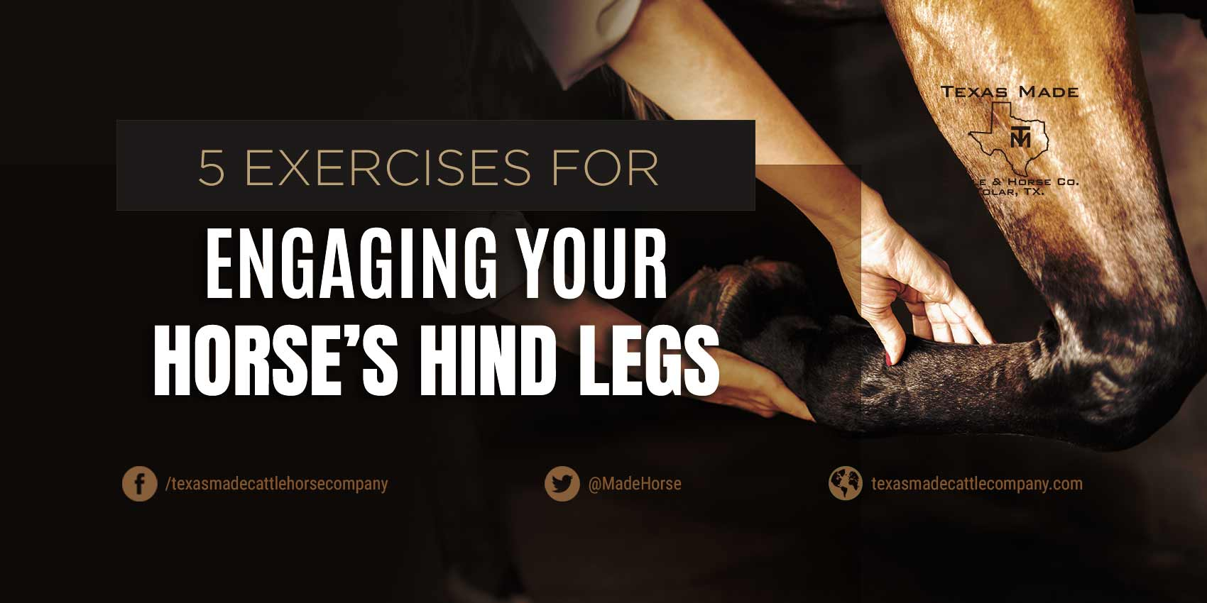 5 Exercises For Engaging Your Horse's Hind Legs