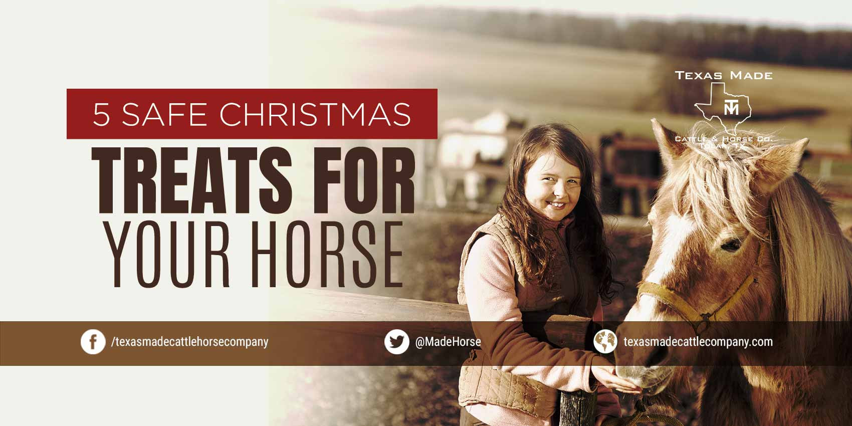 5 Safe Christmas Treats For Your Horse