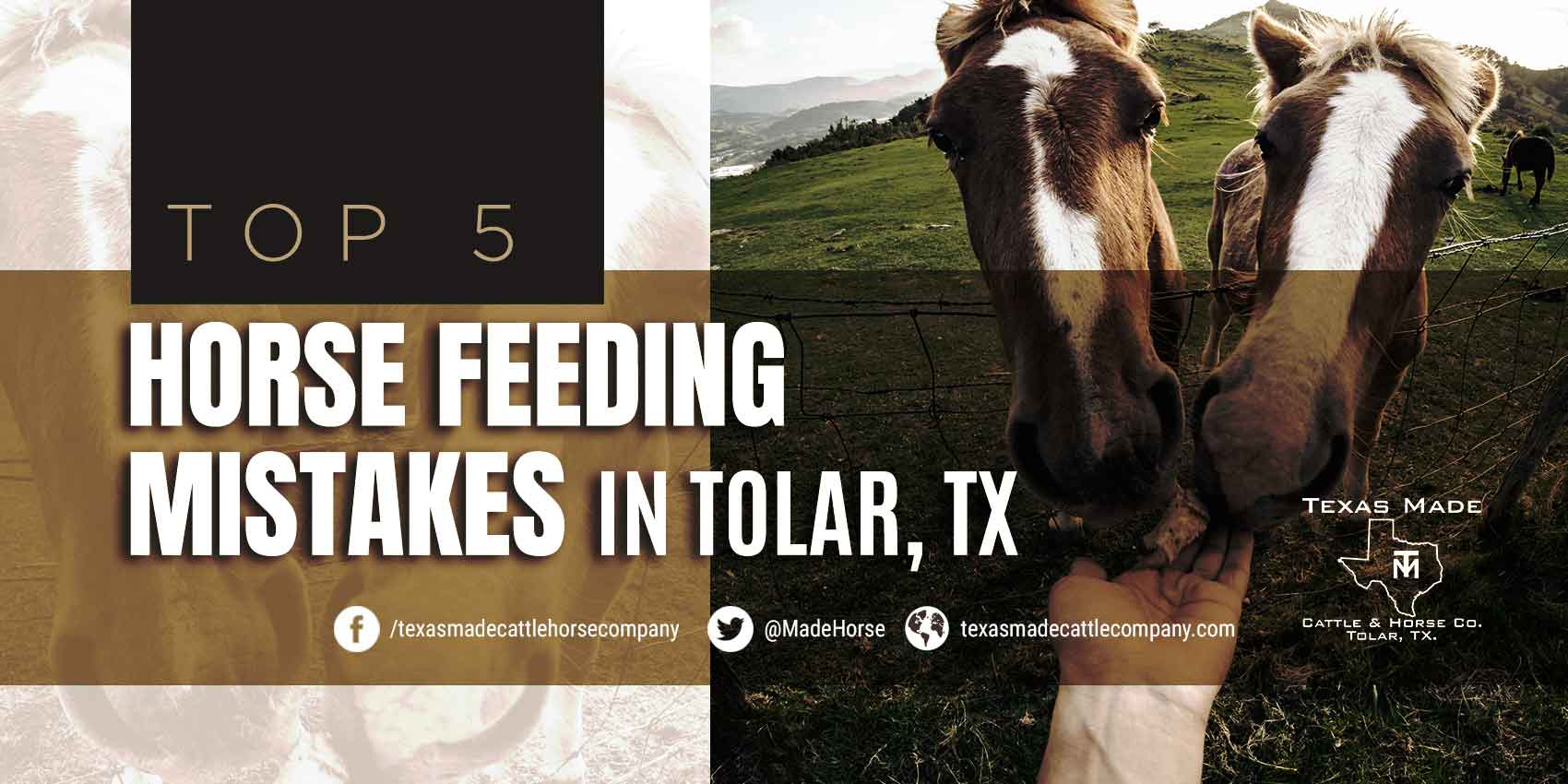 Top 5 Horse Feeding Mistakes in Tolar, TX