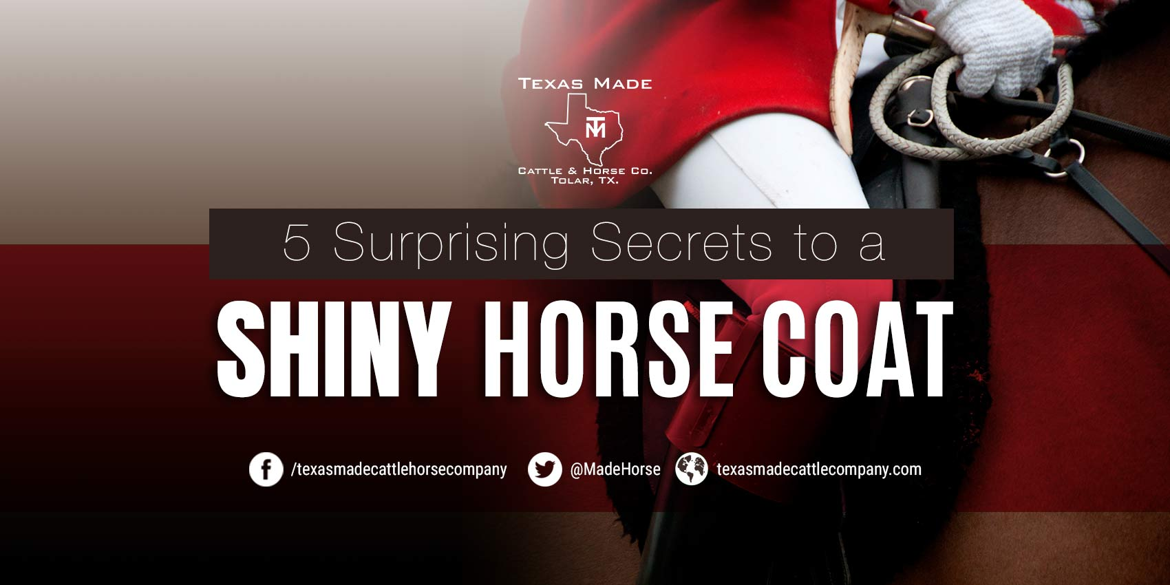 5 Surprising Secrets to a Shiny Horse Coat