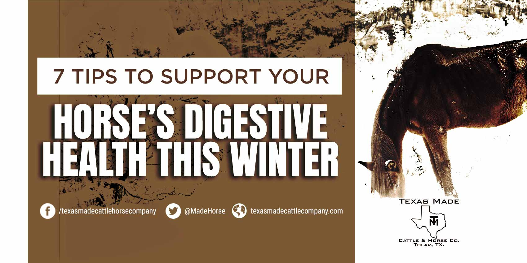 7 Tips to Support Your Horse's Digestive Health This Winter