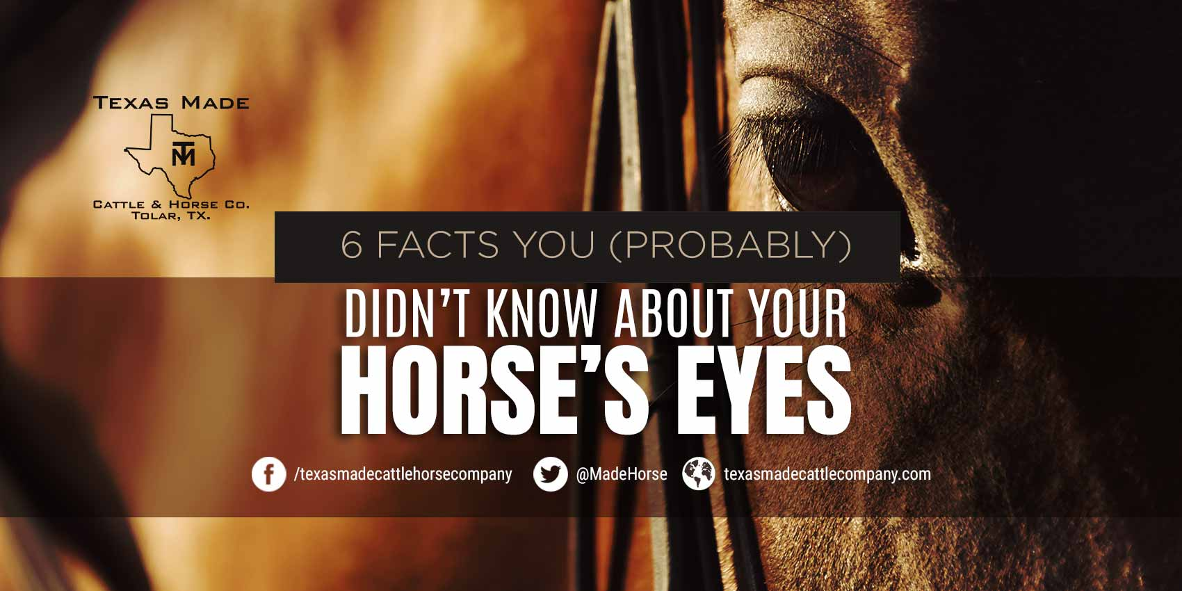 6 Facts You (Probably) Didn't Know About Your Horse's Eyes