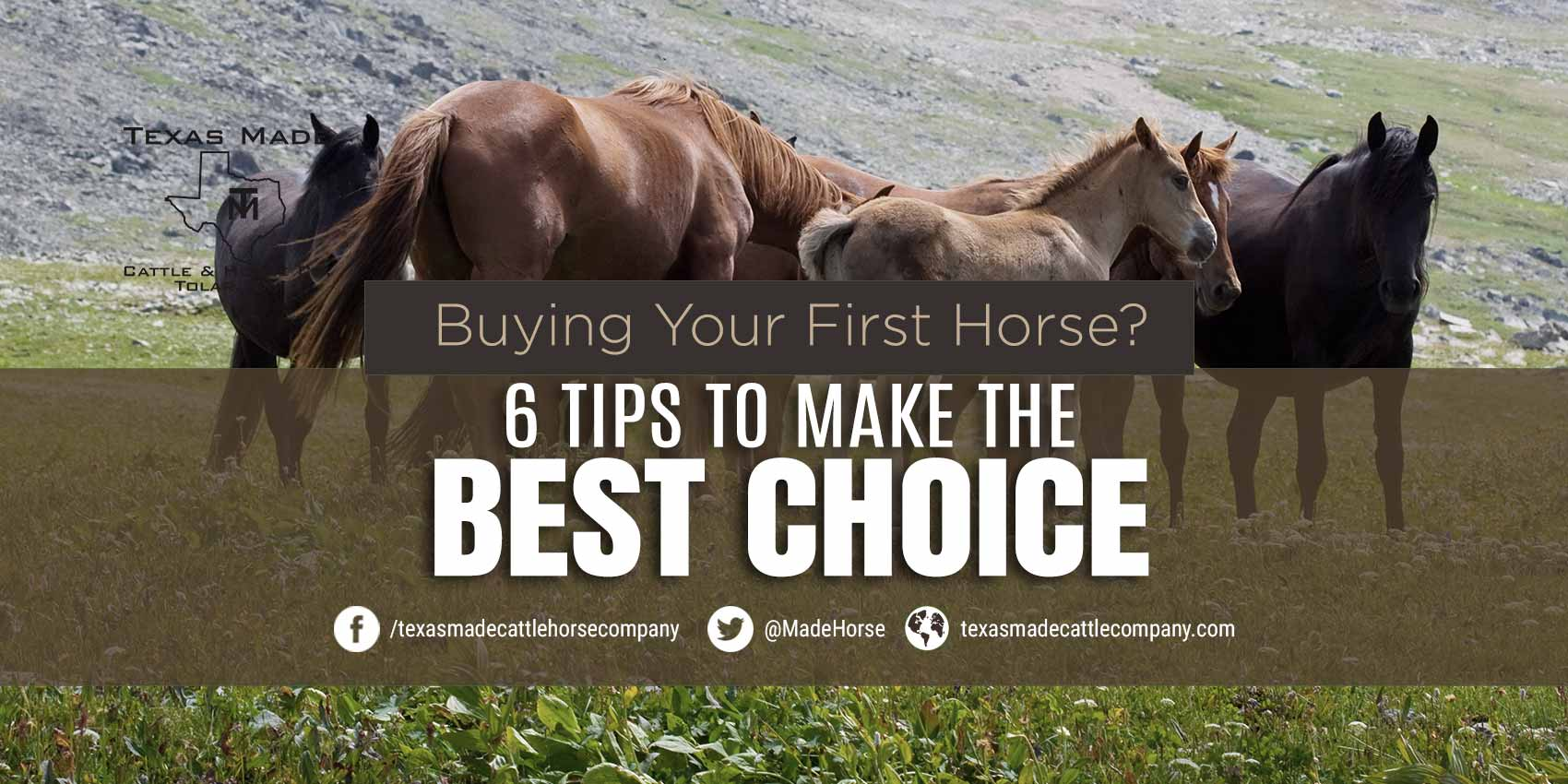 Buying Your First Horse? 6 Tips to Make the Best Choice