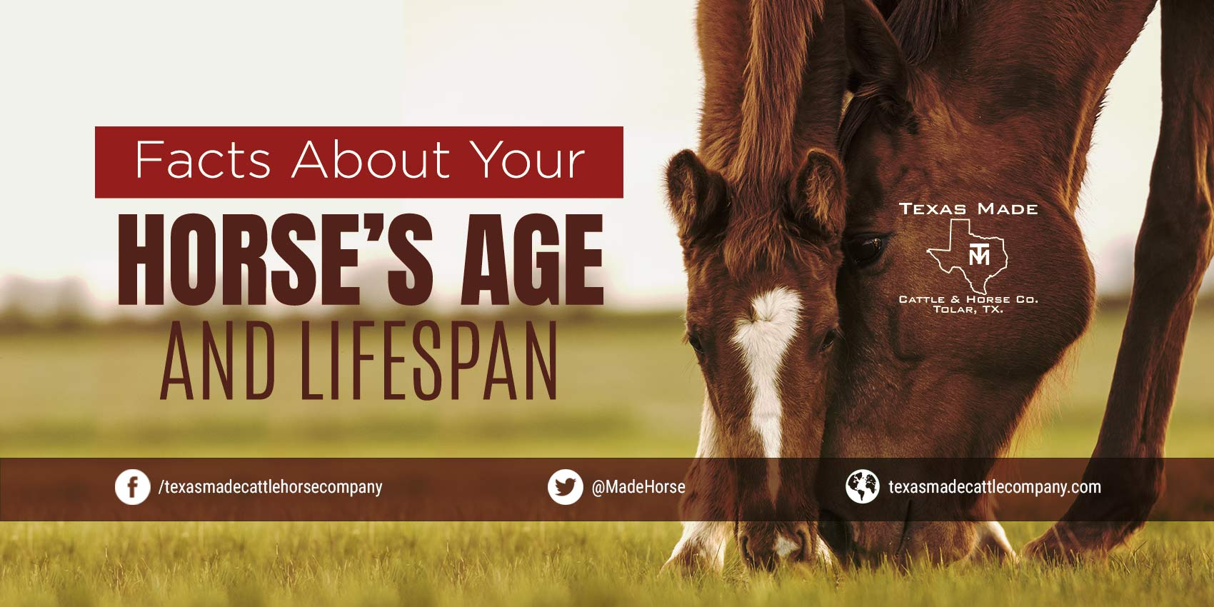 Facts About Your Horse's Age and Lifespan
